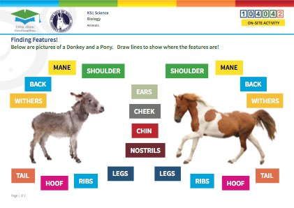 Click to view Resource 104042 Finding Features!  Comparing Donkeys and Ponies
