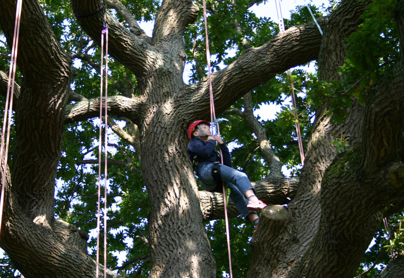 Goodleaf Tree Climbing gallery image