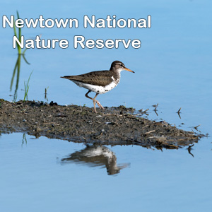 Newtown Nature Reserve Logo